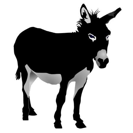 donkey: vectoren ezel