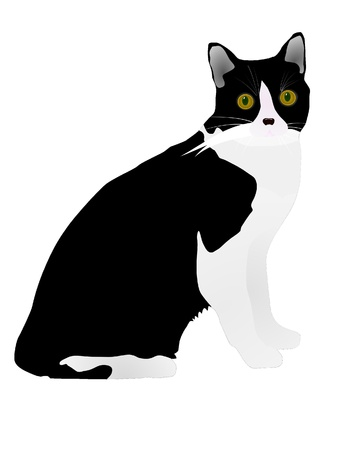 vector black cat Stock Vector - 11897522