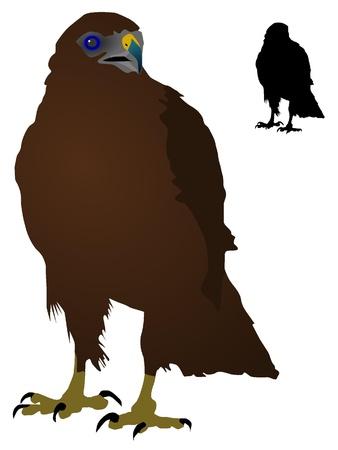 steppe: vectors Steppe Eagle Illustration