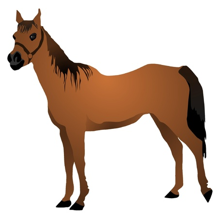 steed: vector image of a horse