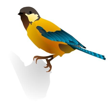 bird feet: vector image of  bird
