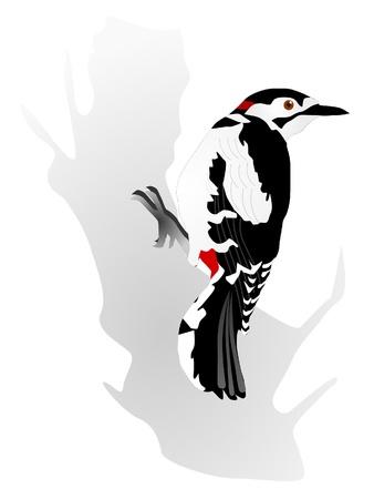Vectors woodpecker