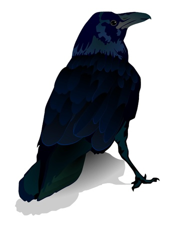 ominous: Vector image of a crow