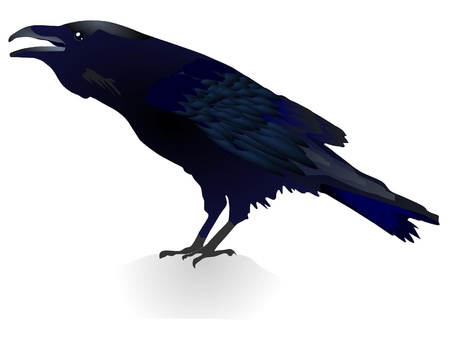 Vector illustration of a crow Illustration
