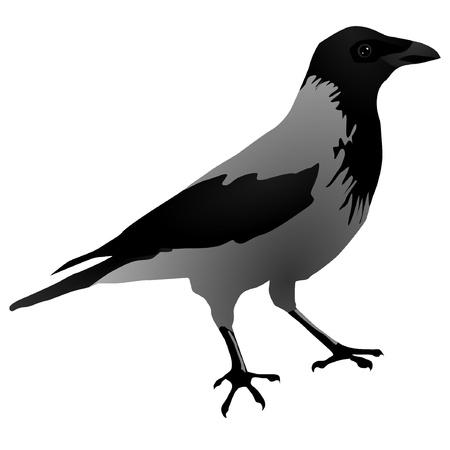 Vectors Raven Vector