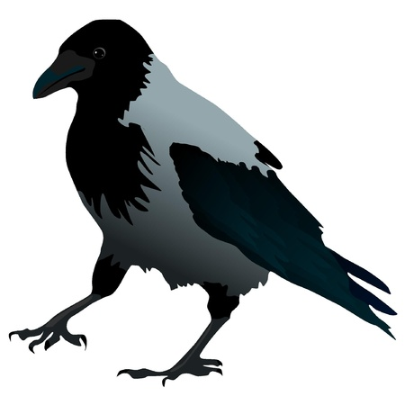 Vector illustration of raven with a raised paw Vector