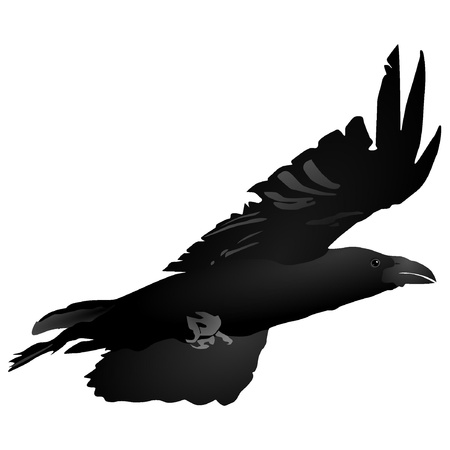 carrion: Vector image of a flying crow