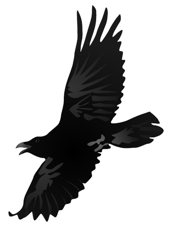 ominous: Vector drawing a flying crow Illustration