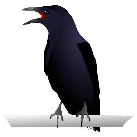 urraca: Vectores del Cuervo