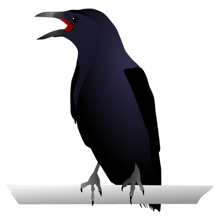 blackbird: Vectors Raven Illustration