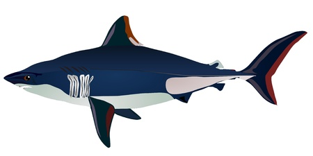 Vectors shark Stock Vector - 11897513