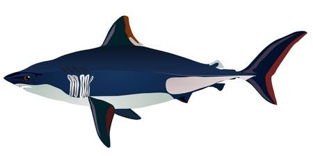 Vectors shark Stock Vector - 11897513