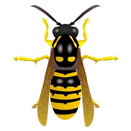 wasp: Vectores de avispa