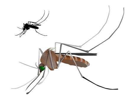 moscerino: Vettori zanzara