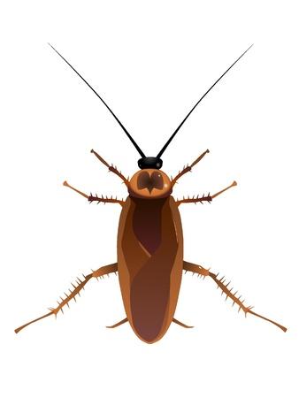 escarabajo: Vectores de cucarachas