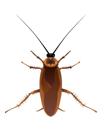 Vectors cockroach Illustration