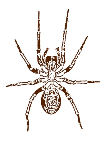 Vector image of a spider Stock Vector - 11908447