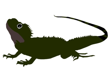 Salamander photo