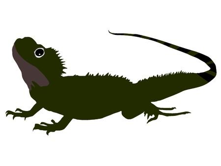 salamander: Salamandra Archivio Fotografico