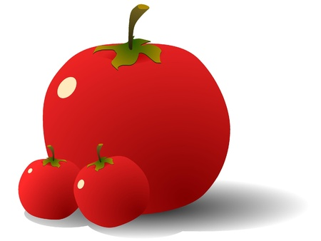 Vector illustration of Tomatoes Stock Illustration - 11942544