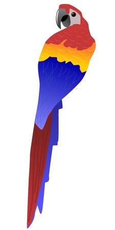 Vector illustration of parrot illustration