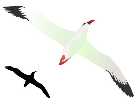 Vector drawing  of Albatross photo