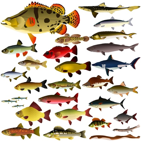 Vector collection of fish Stock Vector - 11943117