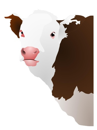 Vector illustration of a cows head Vector