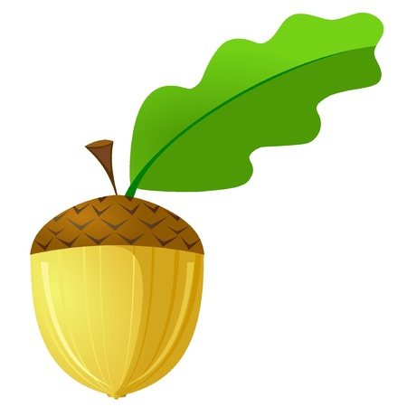 woodland: Vector illustration of an acorn is not a white background Illustration