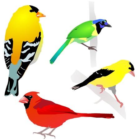 Collection of birds. Vector. EPS10