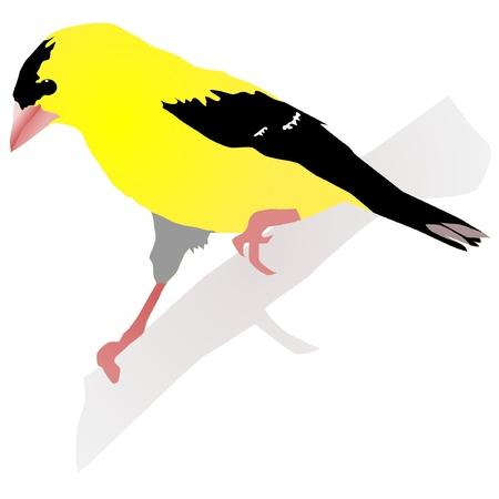 Beautiful yellow bird. Vector Ilustrace