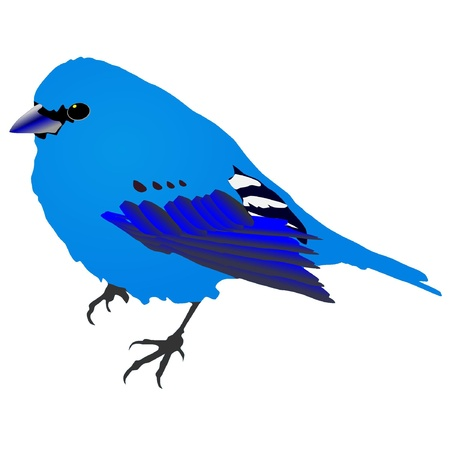 Beautiful blue bird. Vector  Vector