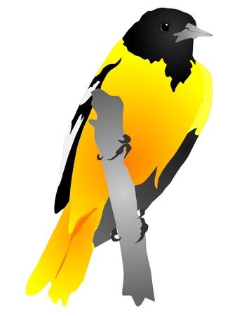 Yellow bird sitting on a branch Stock Vector - 11942583