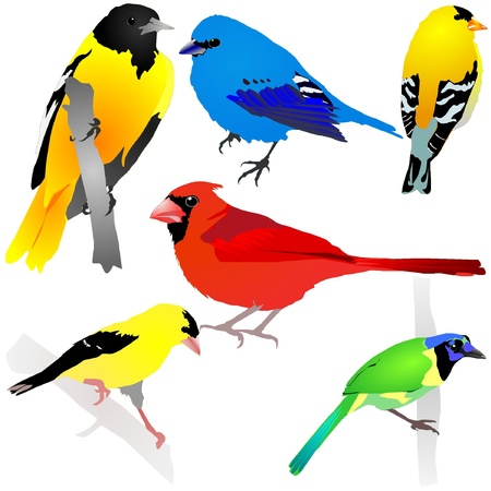 single animal: Collection of birds. Vector EPS10 Illustration