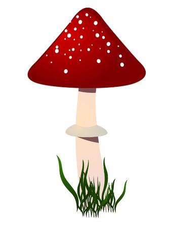 amanita: Amanita. vector  Illustration