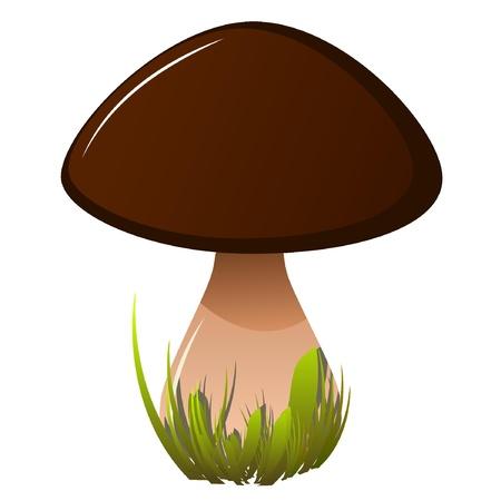 edible mushroom: Boletus. vector