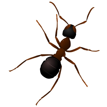 hormiga caricatura: Ilustraci�n vectorial de una hormiga Vectores