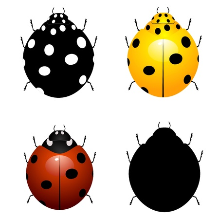 Set vector illustration of ladybirds  Vector