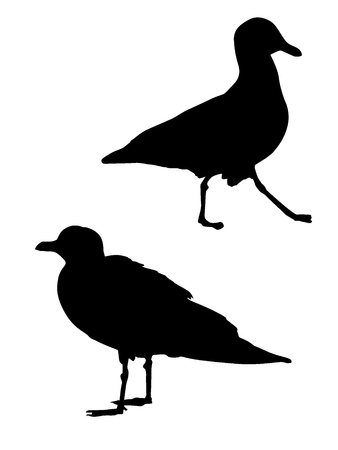 marine bird: Silhouette of a seagull