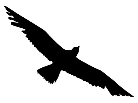 water birds: Silhouette of an albatross Illustration