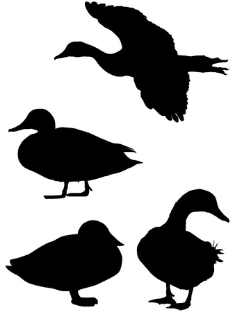 duck feet: Silhouette of a duck