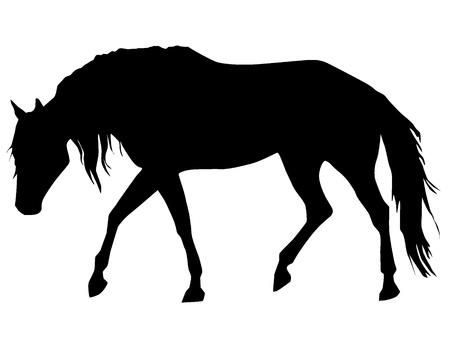 Silhouette of a horse Vector