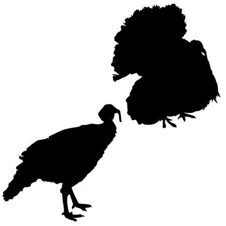 Silhouette of a turkeys Vector