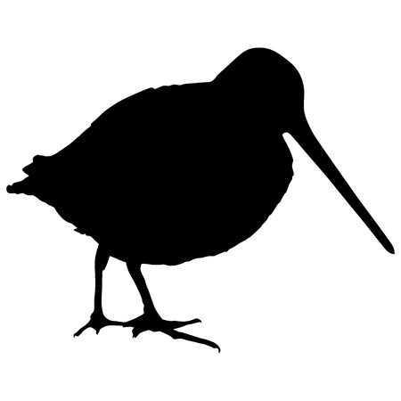 Silhouette of a snipe Vector