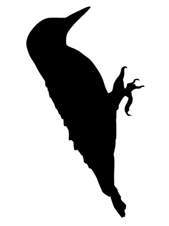 Silhouette of a woodpecker