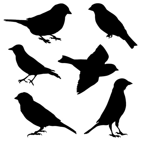 bird icon: Set of images sparrow Illustration