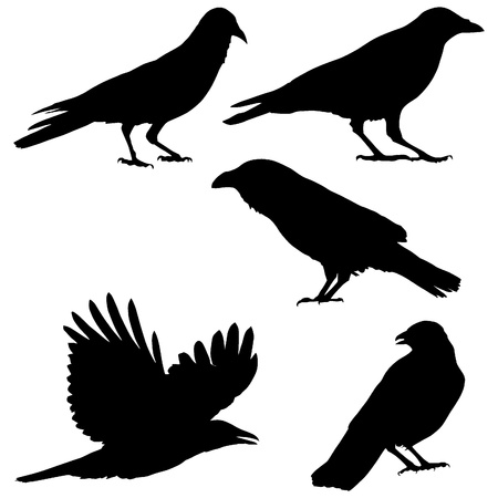 Set of images of crows Vector