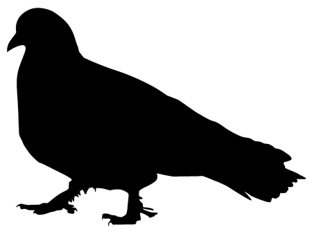 Silhouette of a pigeon Vector