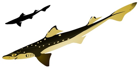 the miller: vectors piked dogfish  Illustration