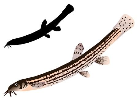vectors loach Иллюстрация